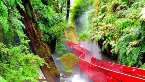 red-wood-bridge-in-valdivian-rainforest-805x454